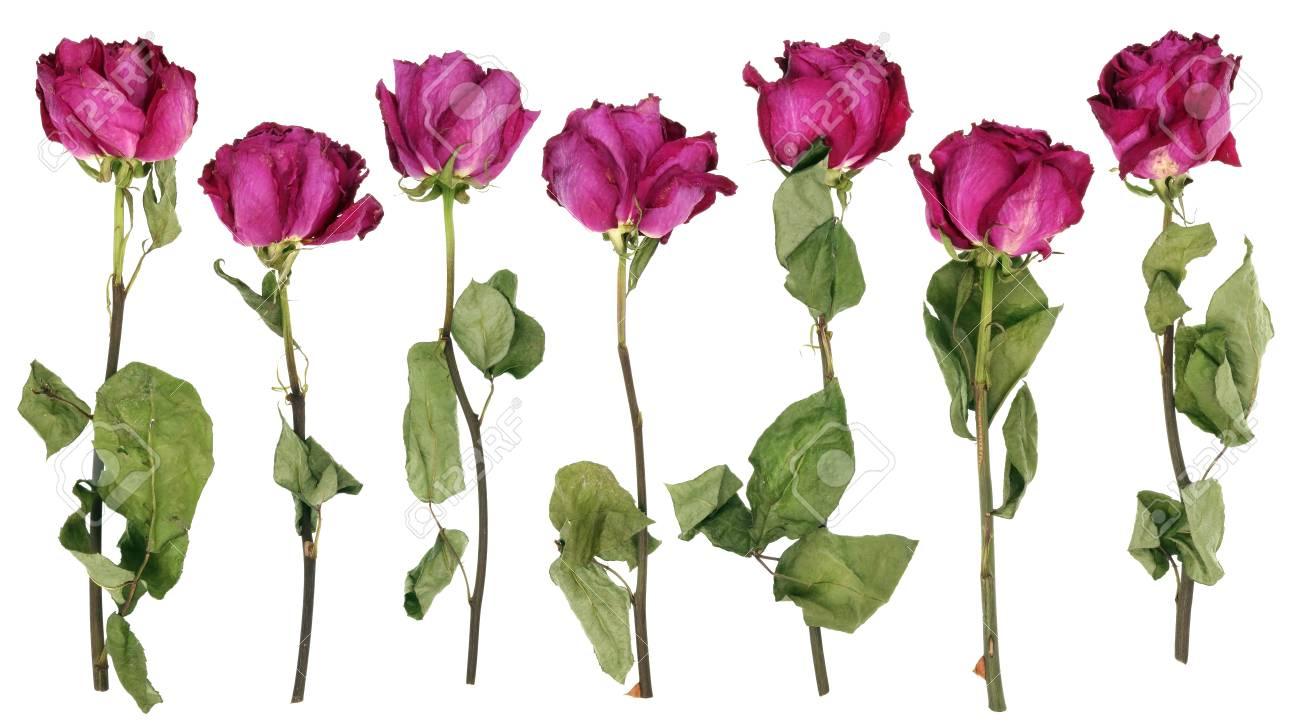 Die Sieben Trocknen Toten Rosa Rosen Bluht Aus Einem Hochzeitsstrauss