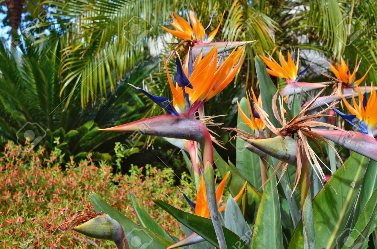 Exotic Tropical Flowers Are Like A Flock Of Paradise Birds