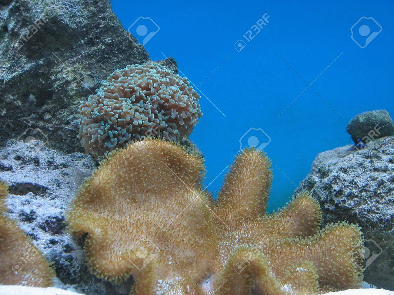 Colorful coral reef with many different types of corals stock photo colorful coral reef with many different types of corals stock photo 16252732 publicscrutiny Images