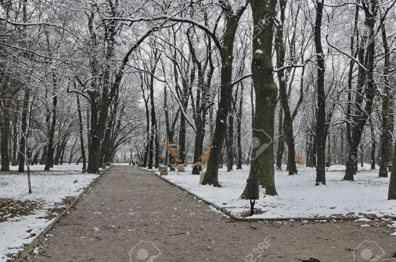 Schneefall Im Garten Im Winter Sofia Bulgarien Lizenzfreie Fotos