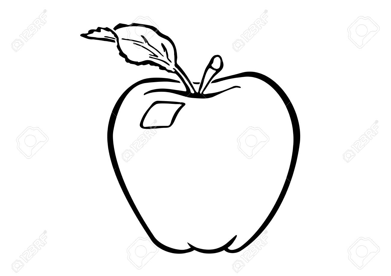 Apple Fruit Drawing Images