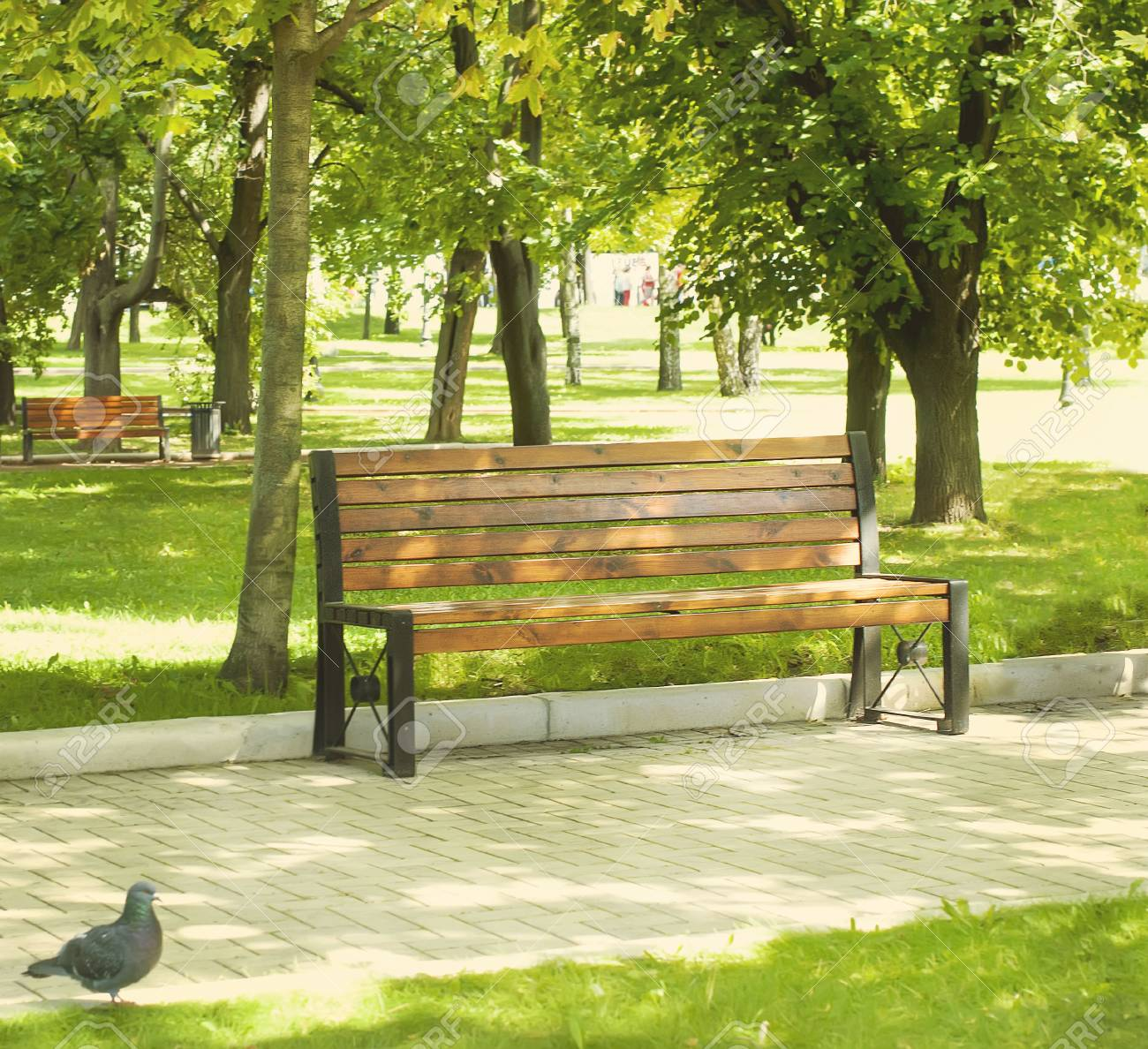 A Park Bench In A Green Park With Trees In Summer Stock Photo