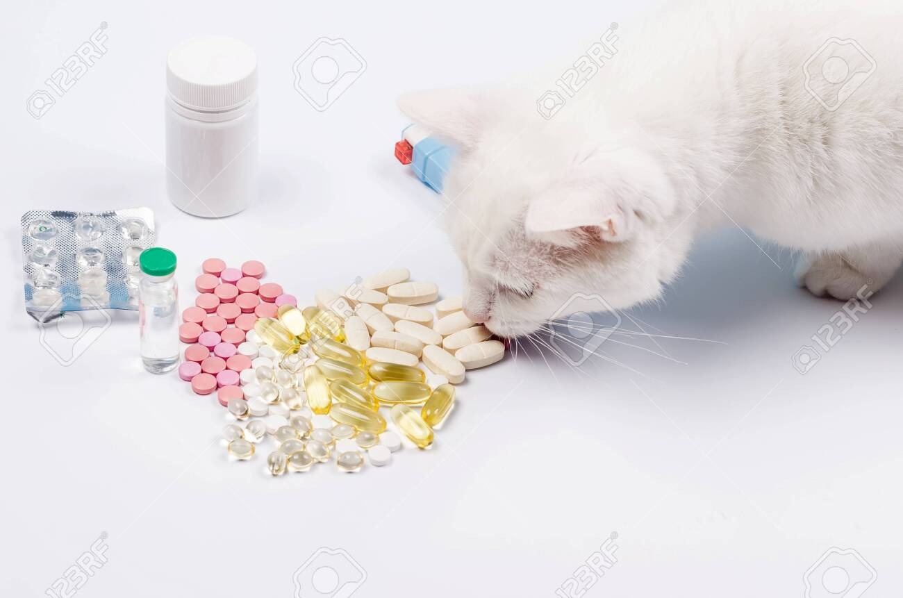 The Angora white cat eats a pill. Concept treatment for cats. Vitamins or tablets for cat. Animal nutritional supplements on white. Veterinary care. - 147422621