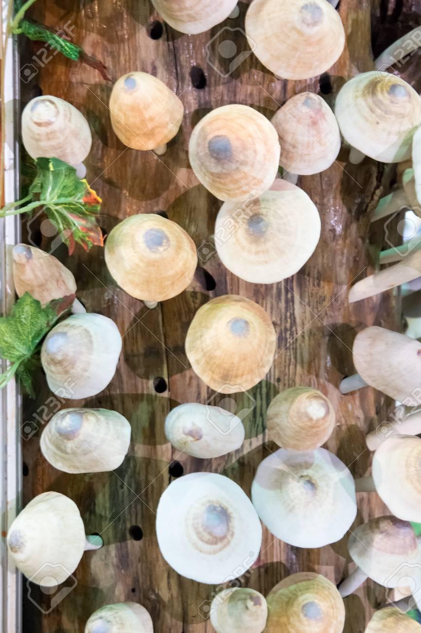 Champignons En Céramique Pour Jardin Et Décoration De La Maison ...