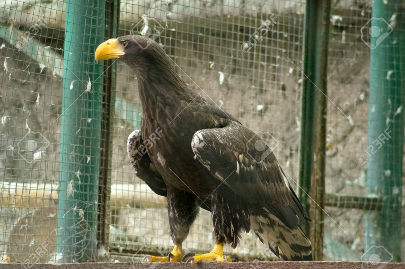 bird of prey - 37911724