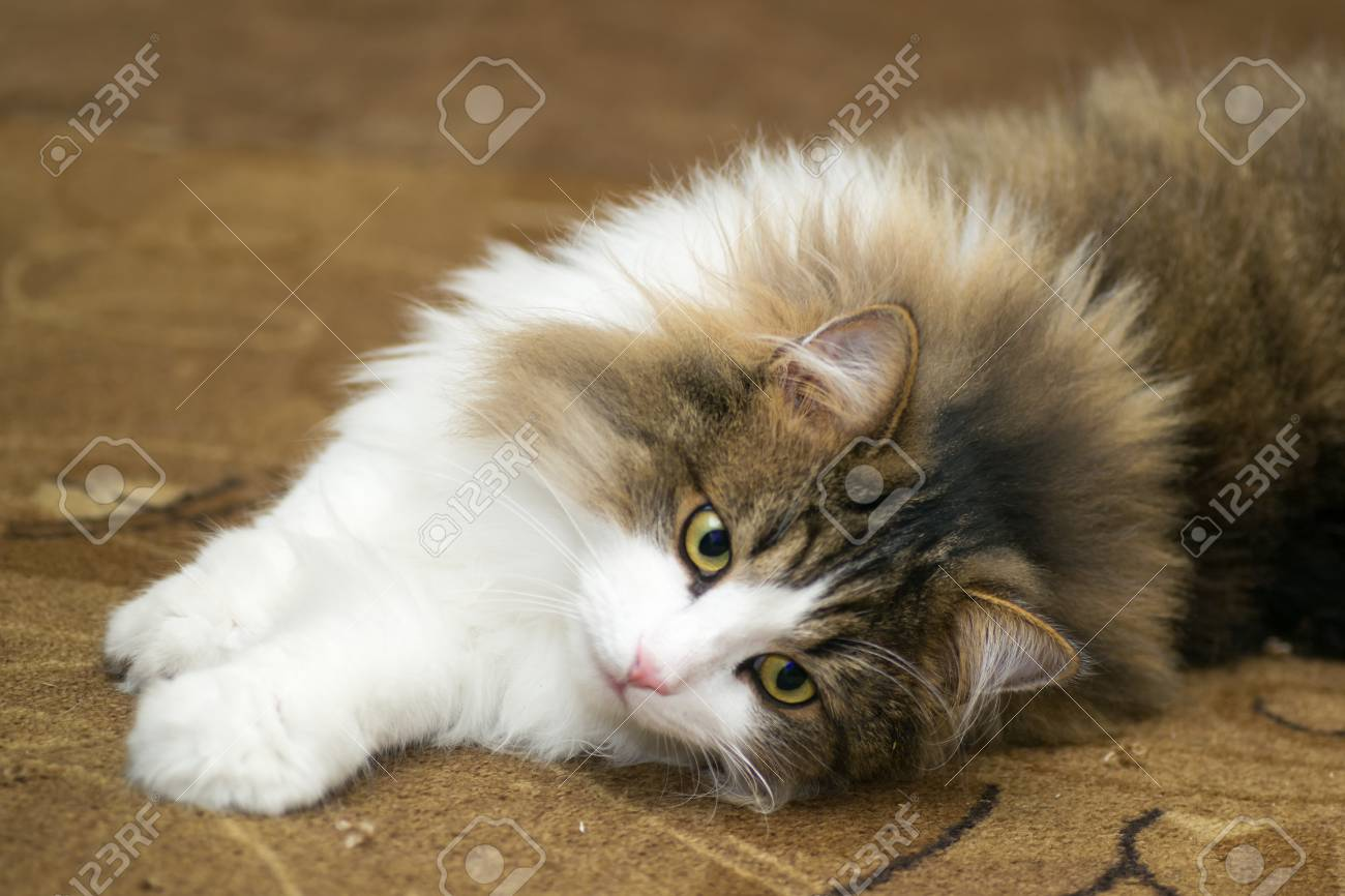 Cat Cats Beautiful White Cute Portrait Isolated Background Stock Photo Picture And Royalty Free Image Image 50397350