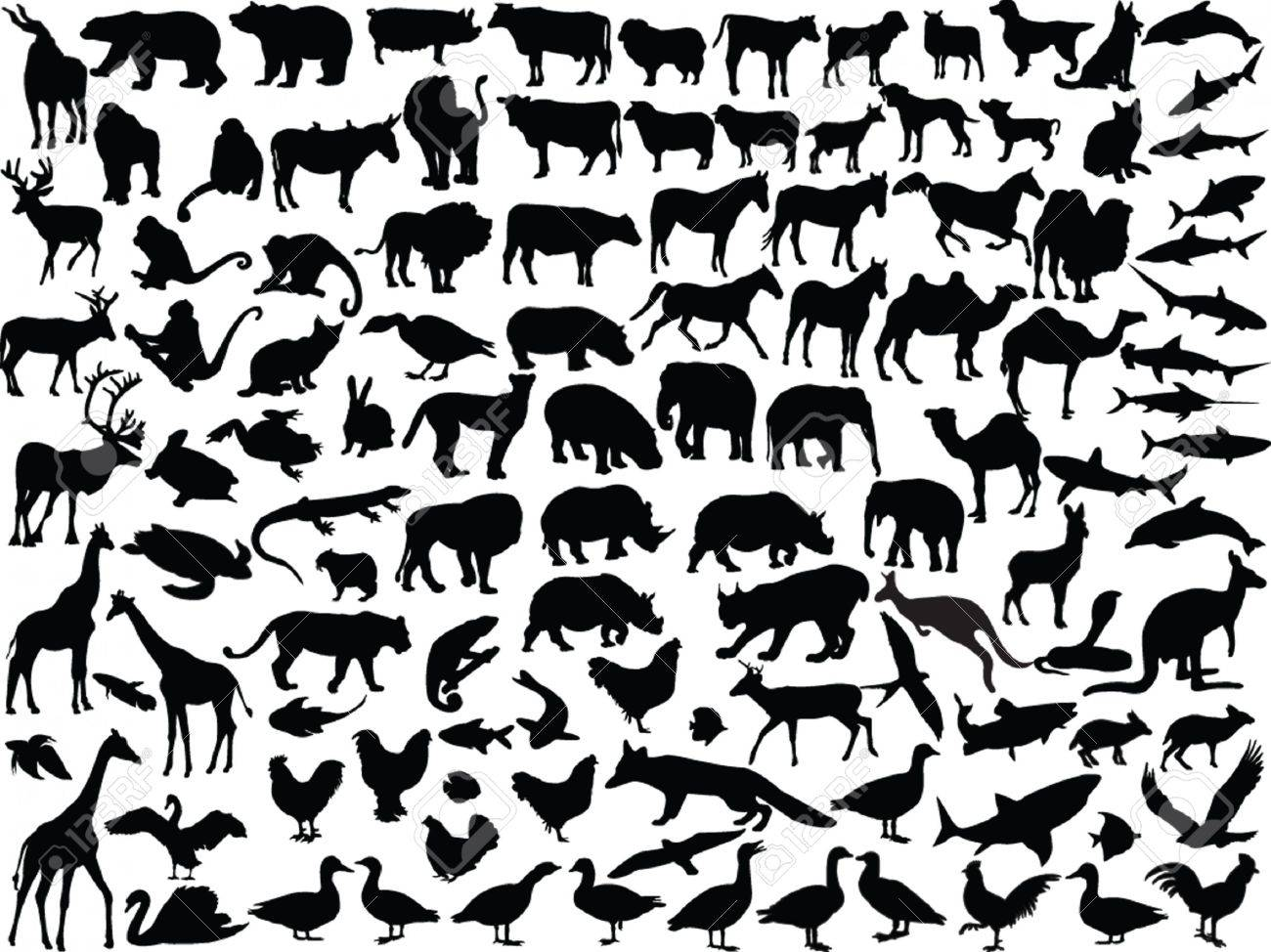 big collection of different animals - vector Stock Vector - 4999177