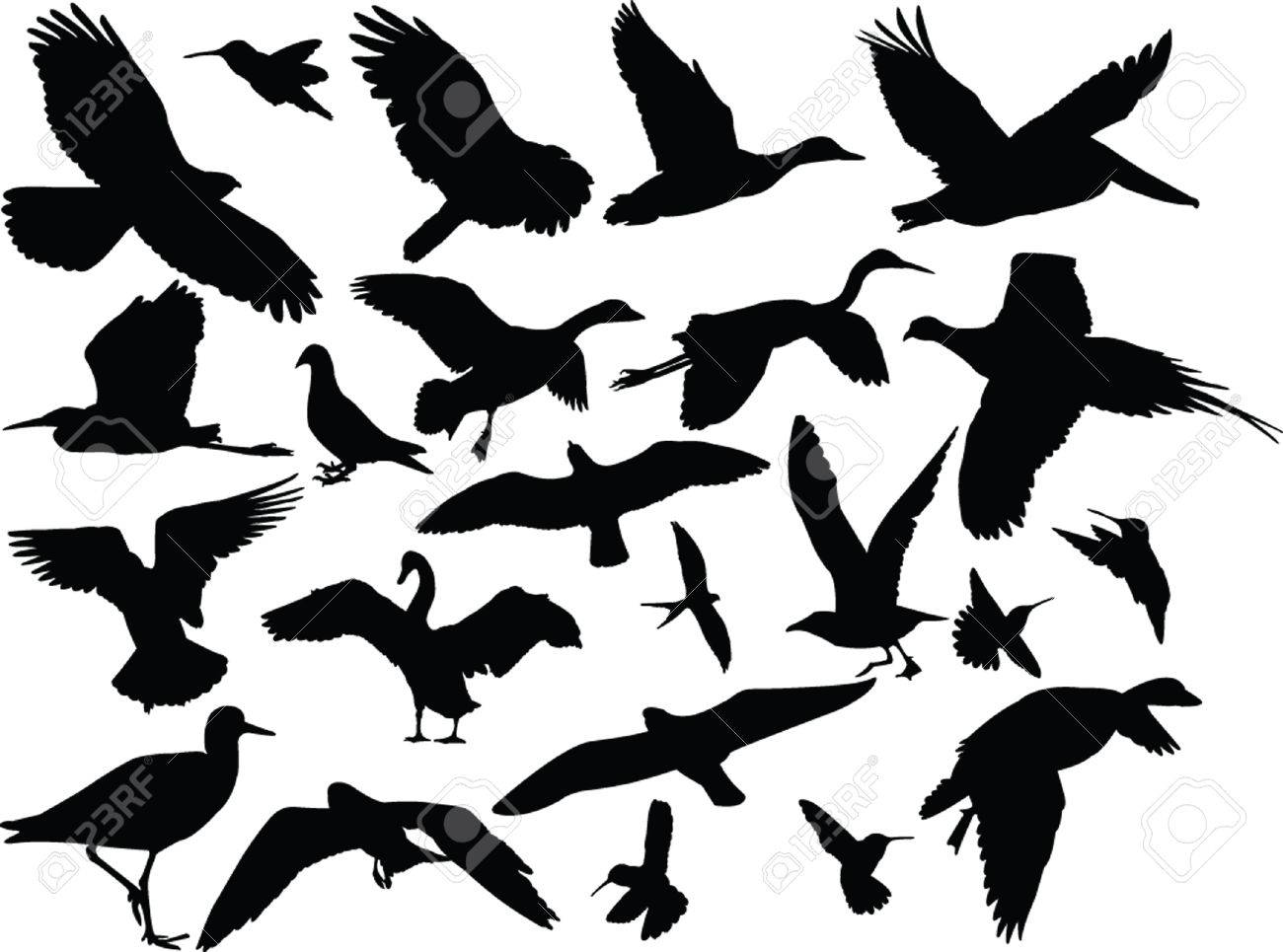 different bird collection - vector - 23317733