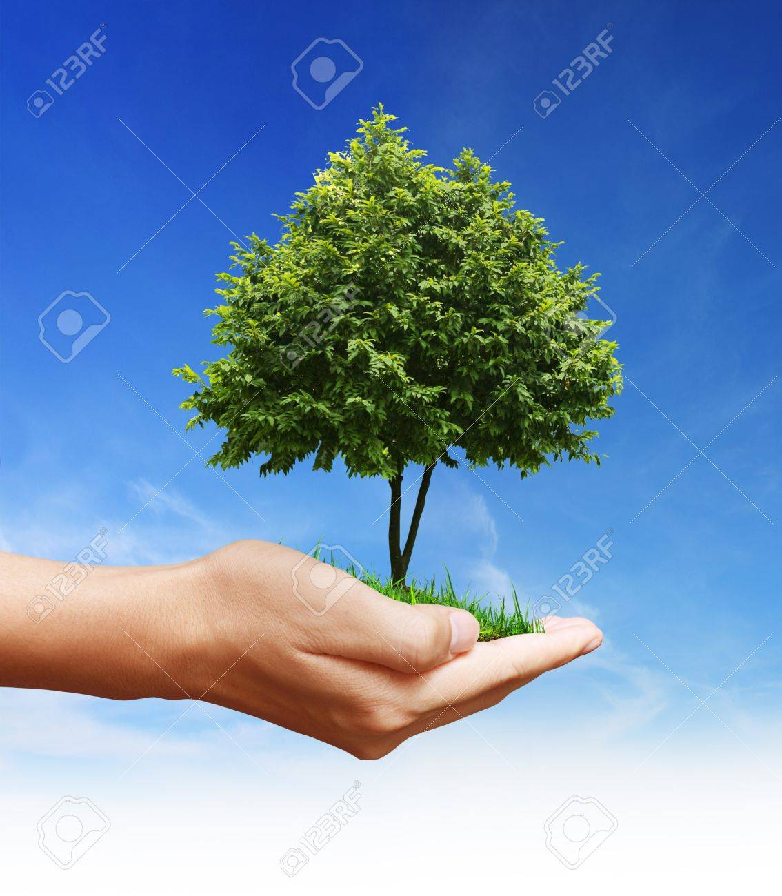 hand plant ,tree Stock Photo - 9670767
