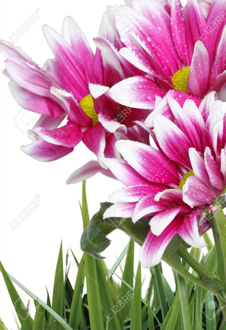 Beautiful flowers Stock Photo - 9724872