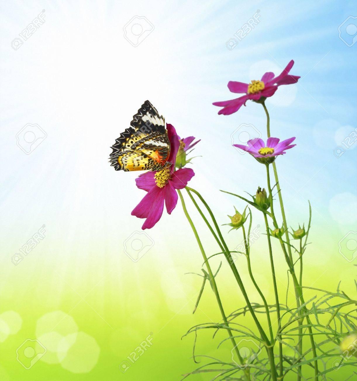 Beautiful Floral - 11709646