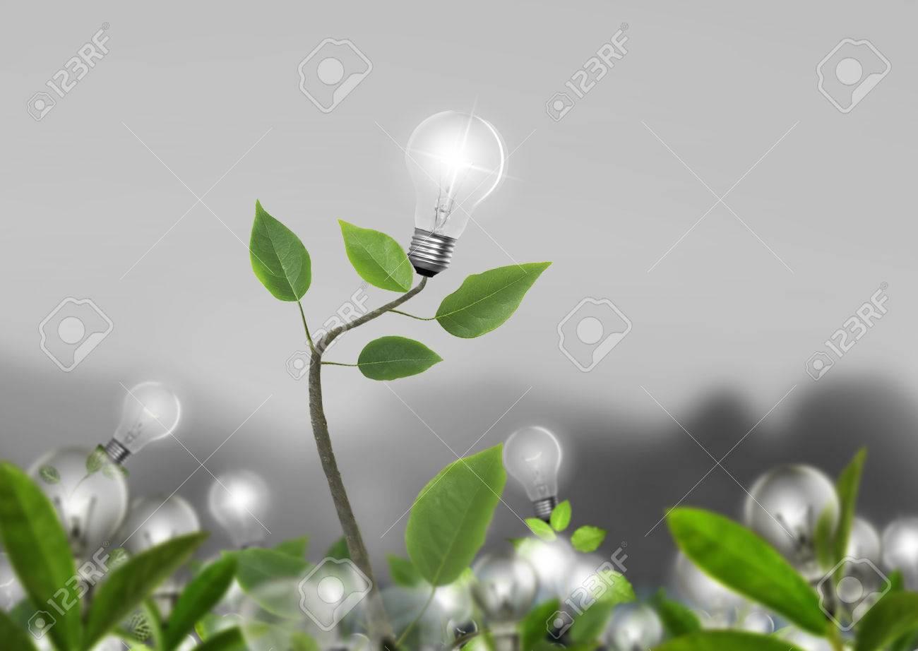 Idea ,light bulb Alternative energy concept - 23984768
