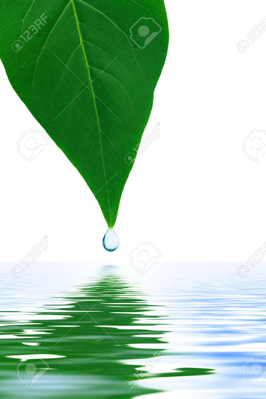 Leaf and water drop isolated on white background Stock Photo - 5066004
