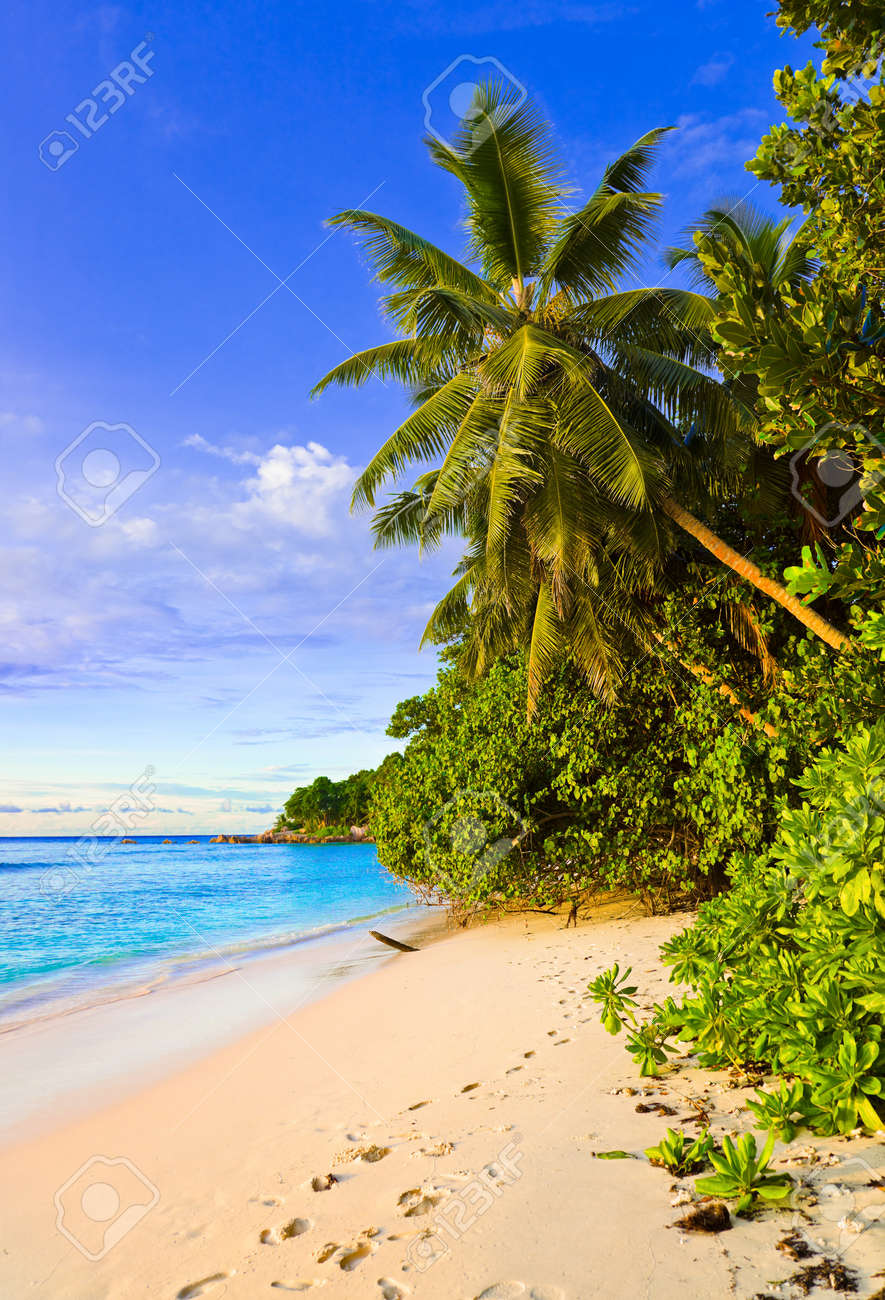 Palms on tropical beach - nature background Stock Photo - 7025500