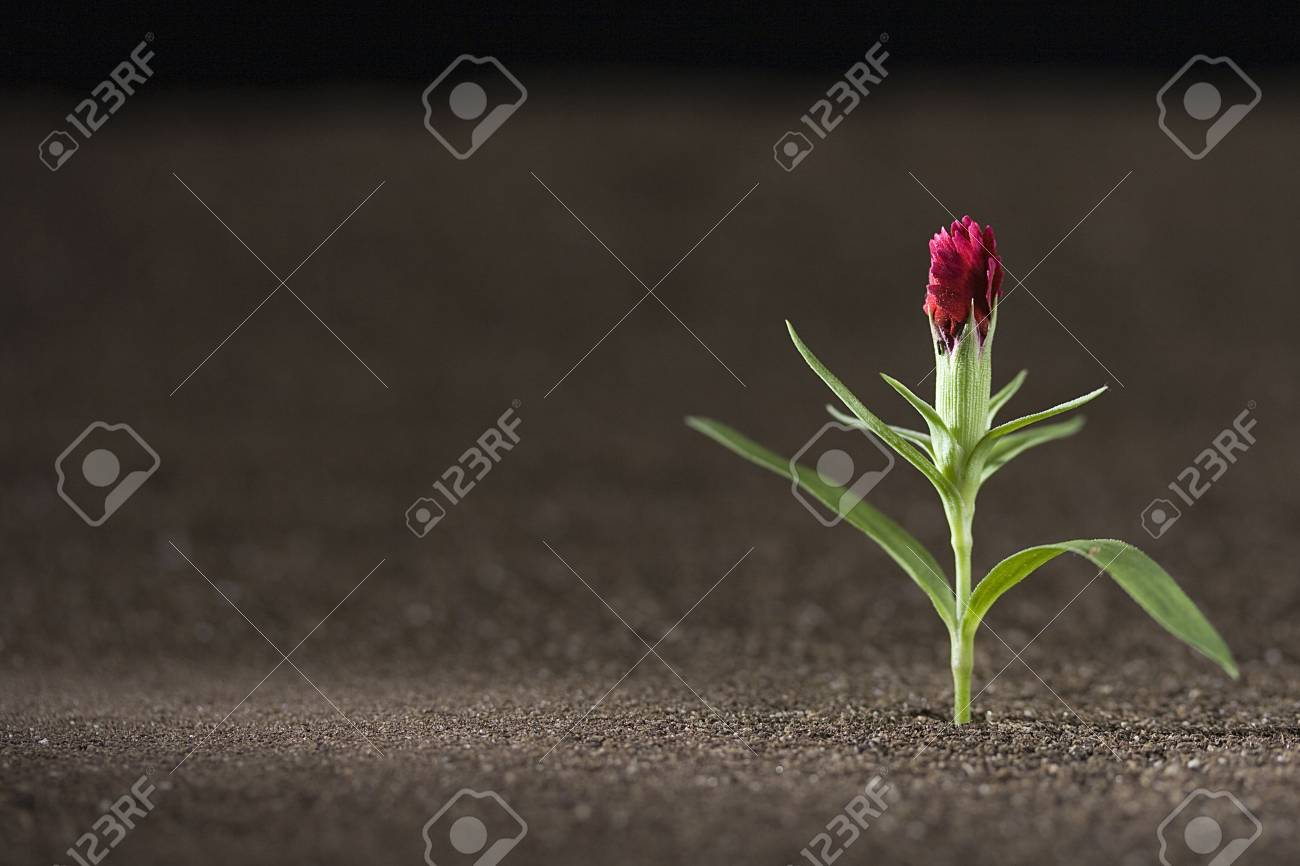 A young green plant growing out of brown soil. Stock Photo - 7555265