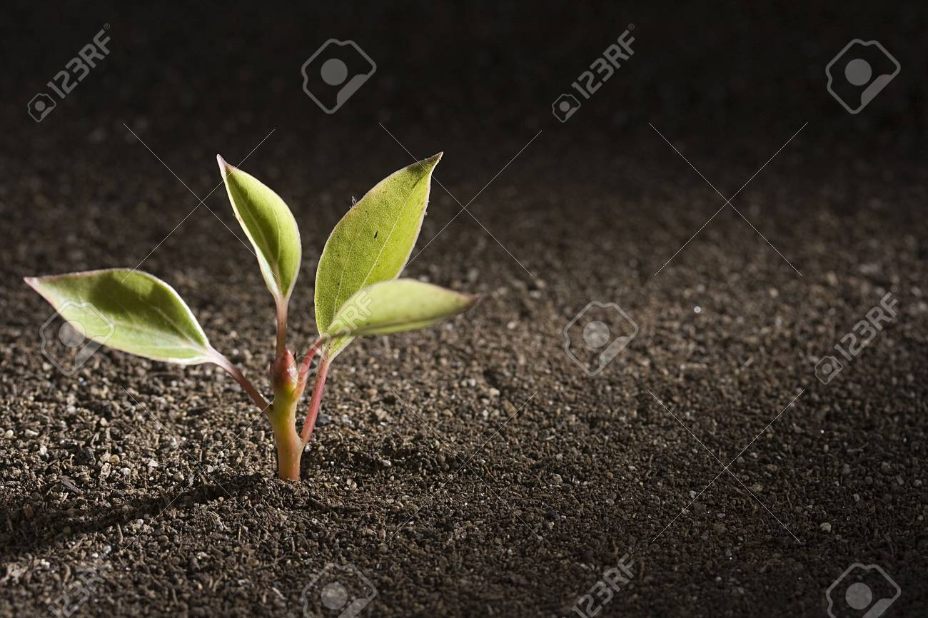 A young green plant growing out of brown soil. Stock Photo - 7578500