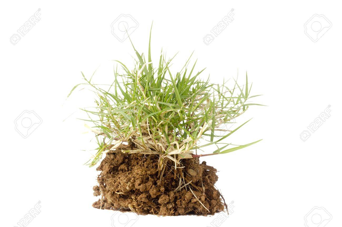 Small section of grass growing out of brown soil on a white background. Stock Photo - 9537942