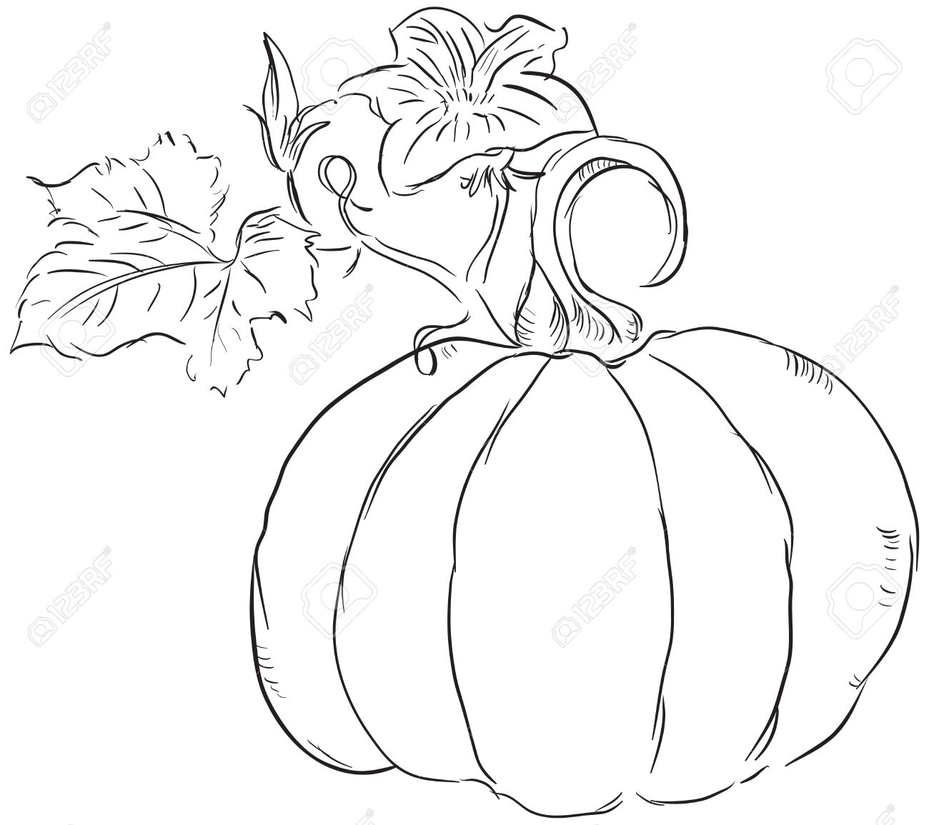 The Fruit Of The Pumpkin With Leaves And Blossoms Ovary Royalty Free Cliparts Vectors And Stock Illustration Image 15627792