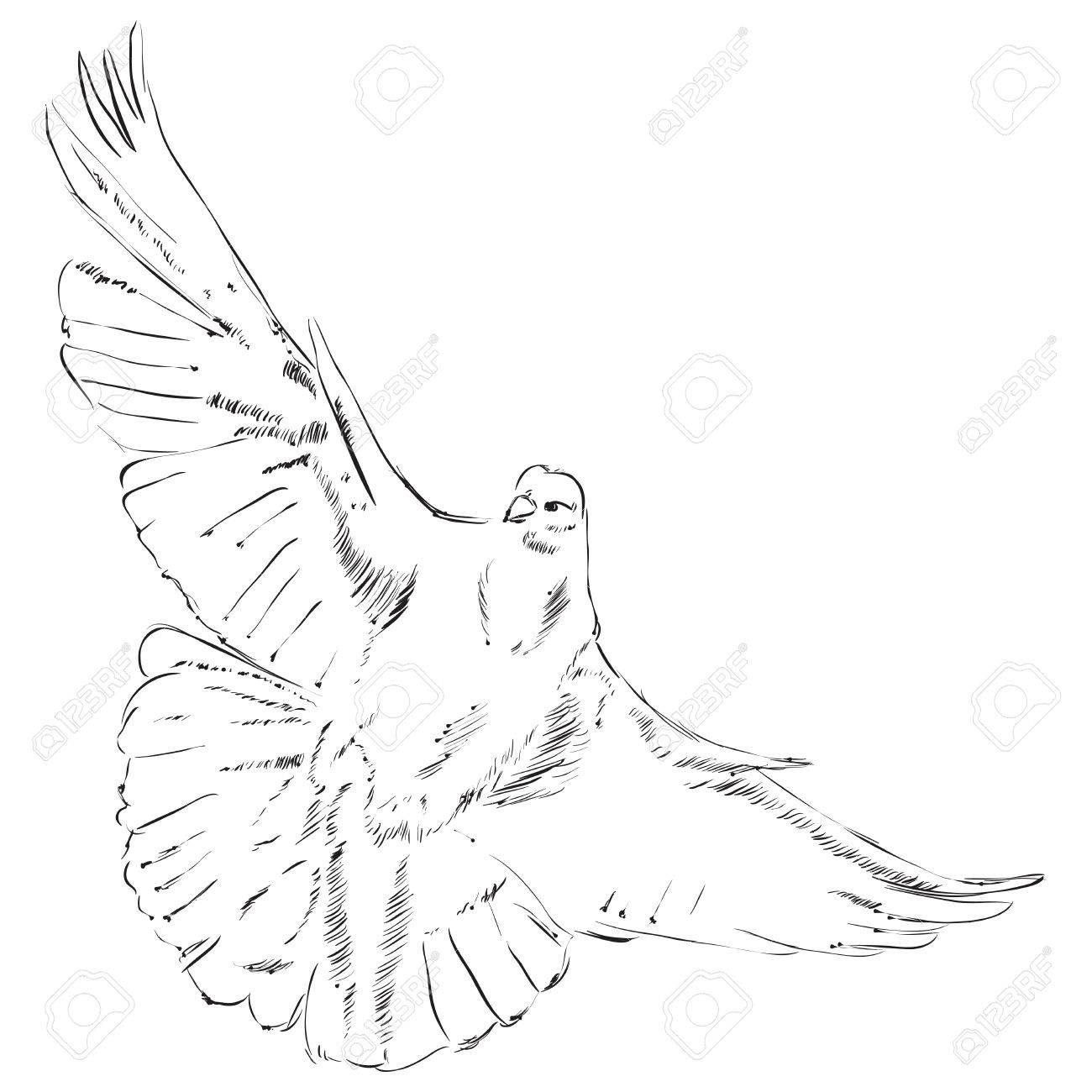 Volare Disegno Colomba è Fatto A Mano Illustrazione Di Vettore