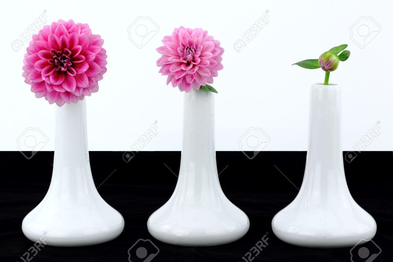 blancos jarrones con flores de dalia foto de archivo