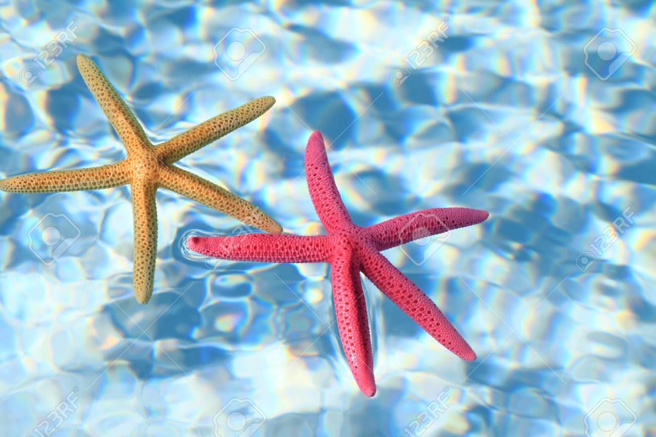 Starfish in the water Stock Photo - 14039926