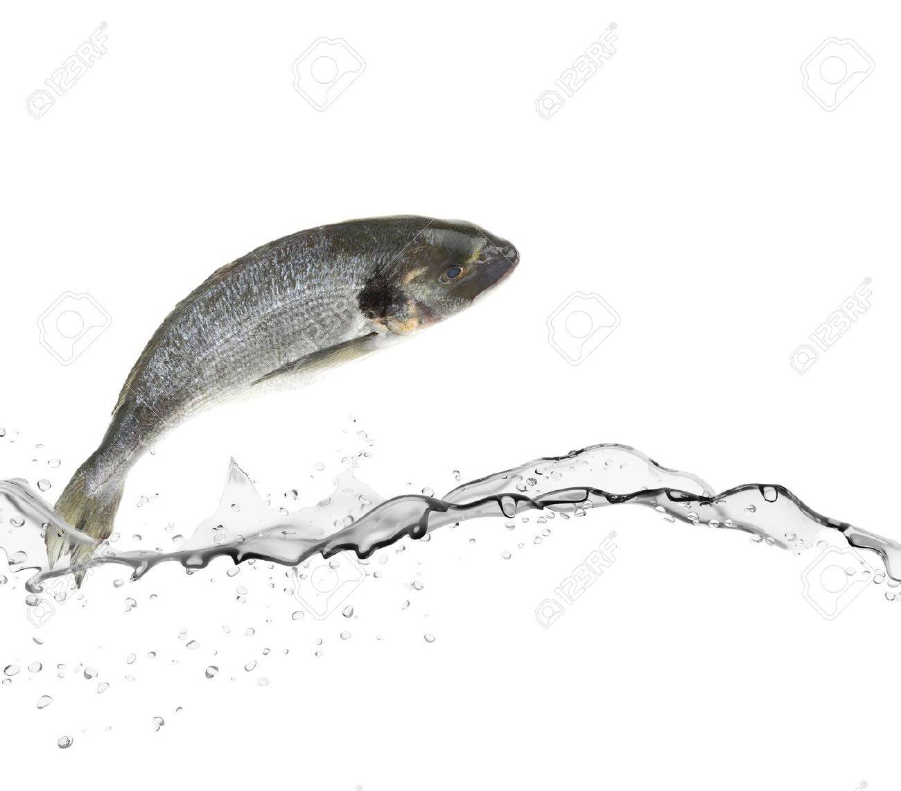 Sea bass fish jumping from water - 18557534