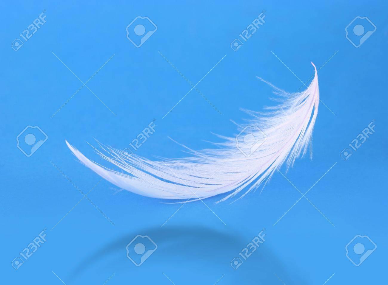 Flying white feather on blue background Stock Photo - 19129246