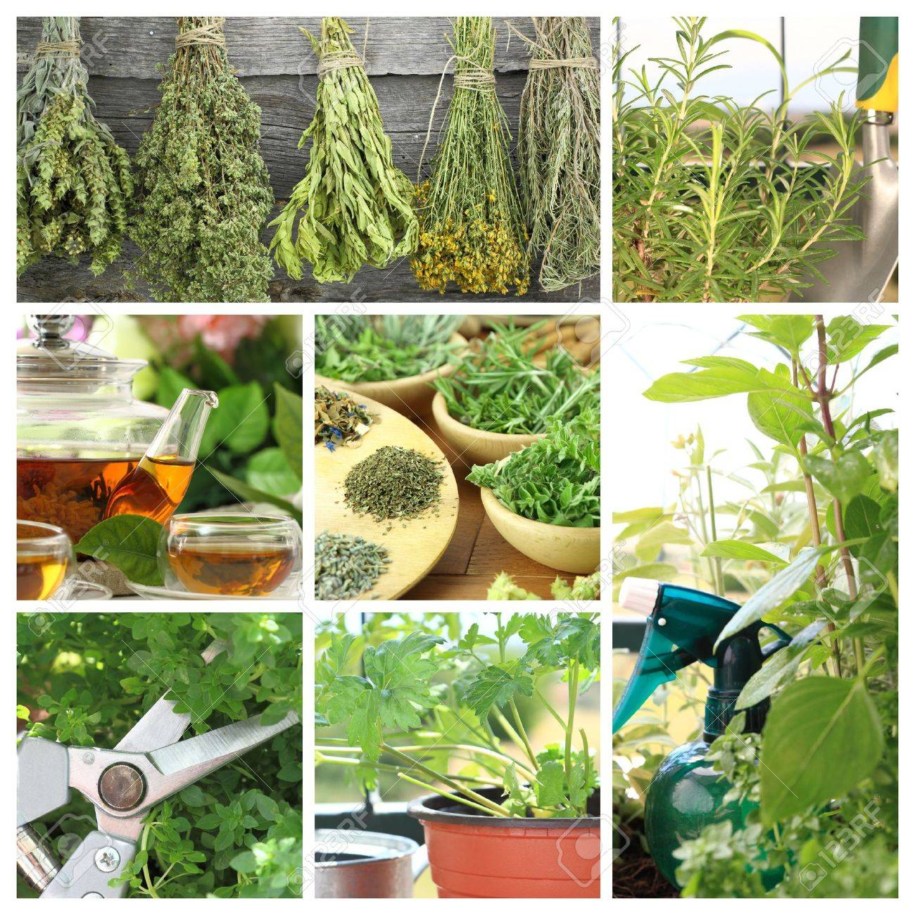 Collage of fresh herbs on balcony garden Stock Photo - 20457343