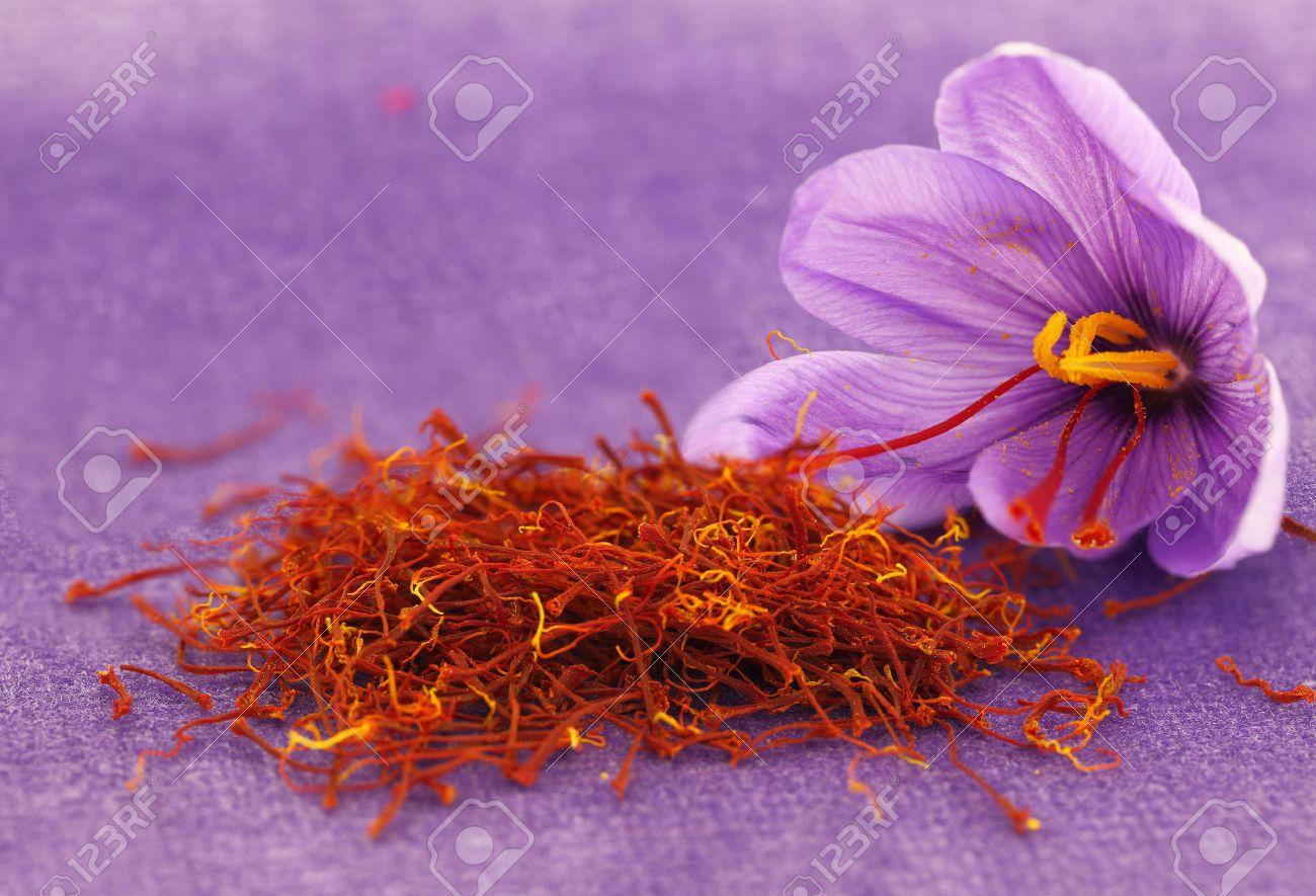 Dried Saffron Spice And Saffron Flower Stock Photo Picture And