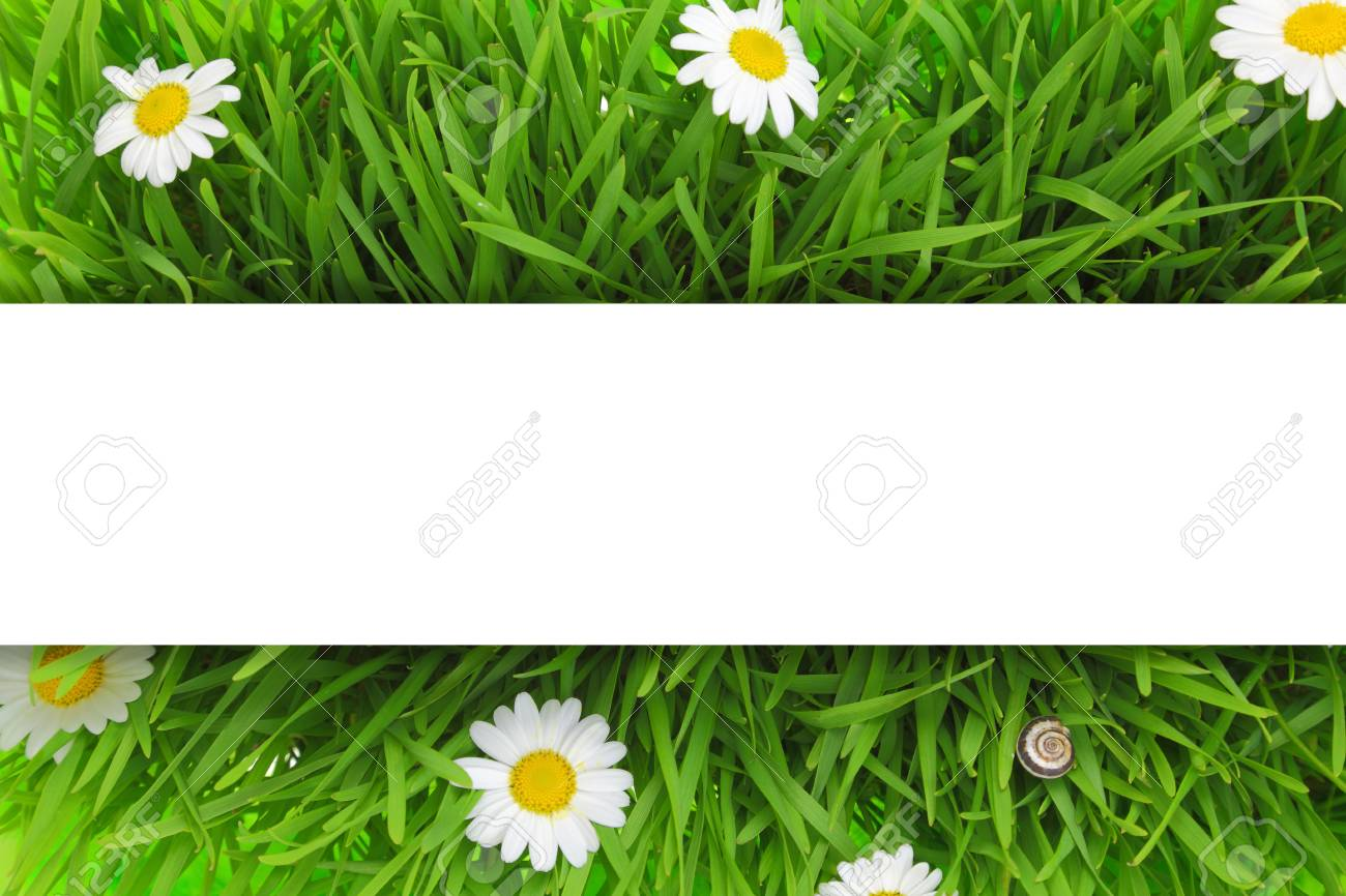 Banner On Grass And White Flowers Background Stock Photo Picture