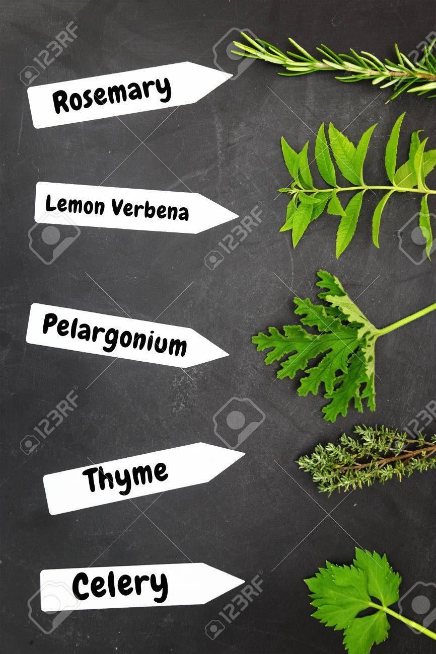 Various Types Of Herbs With Name Tags On Black Background Stock