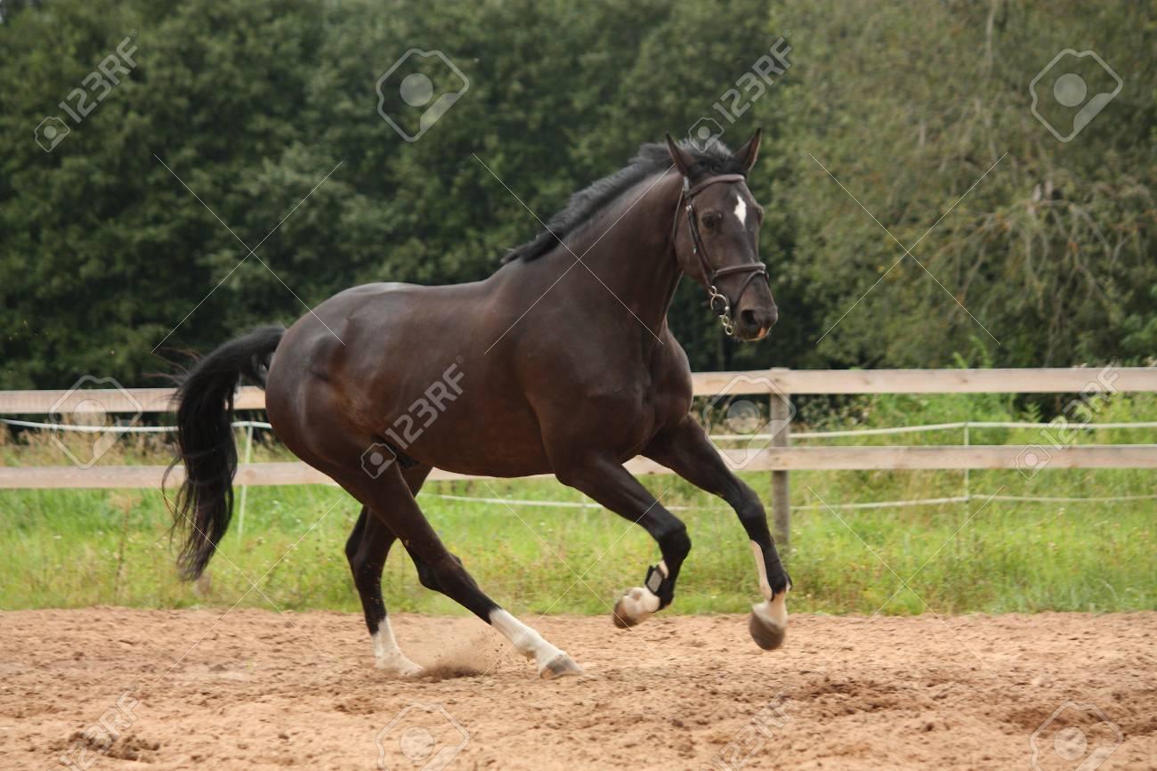 image cheval noir galop