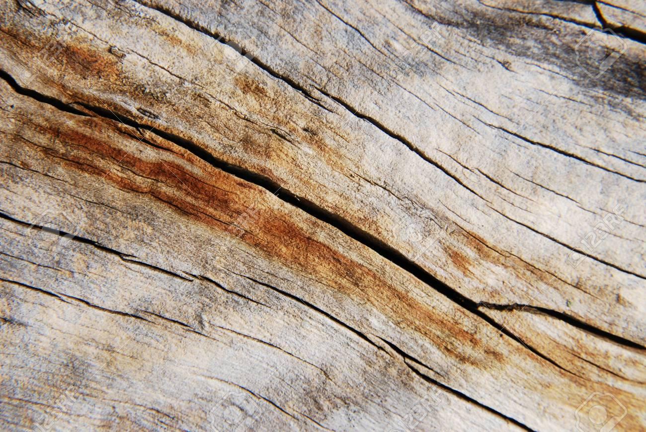 tree bark texture Stock Photo - 15637818