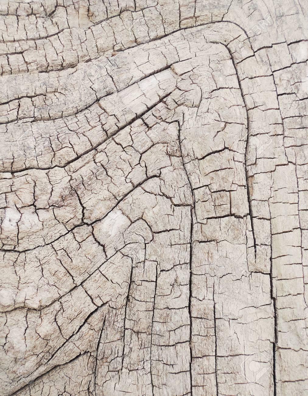 tree bark texture Stock Photo - 20776819