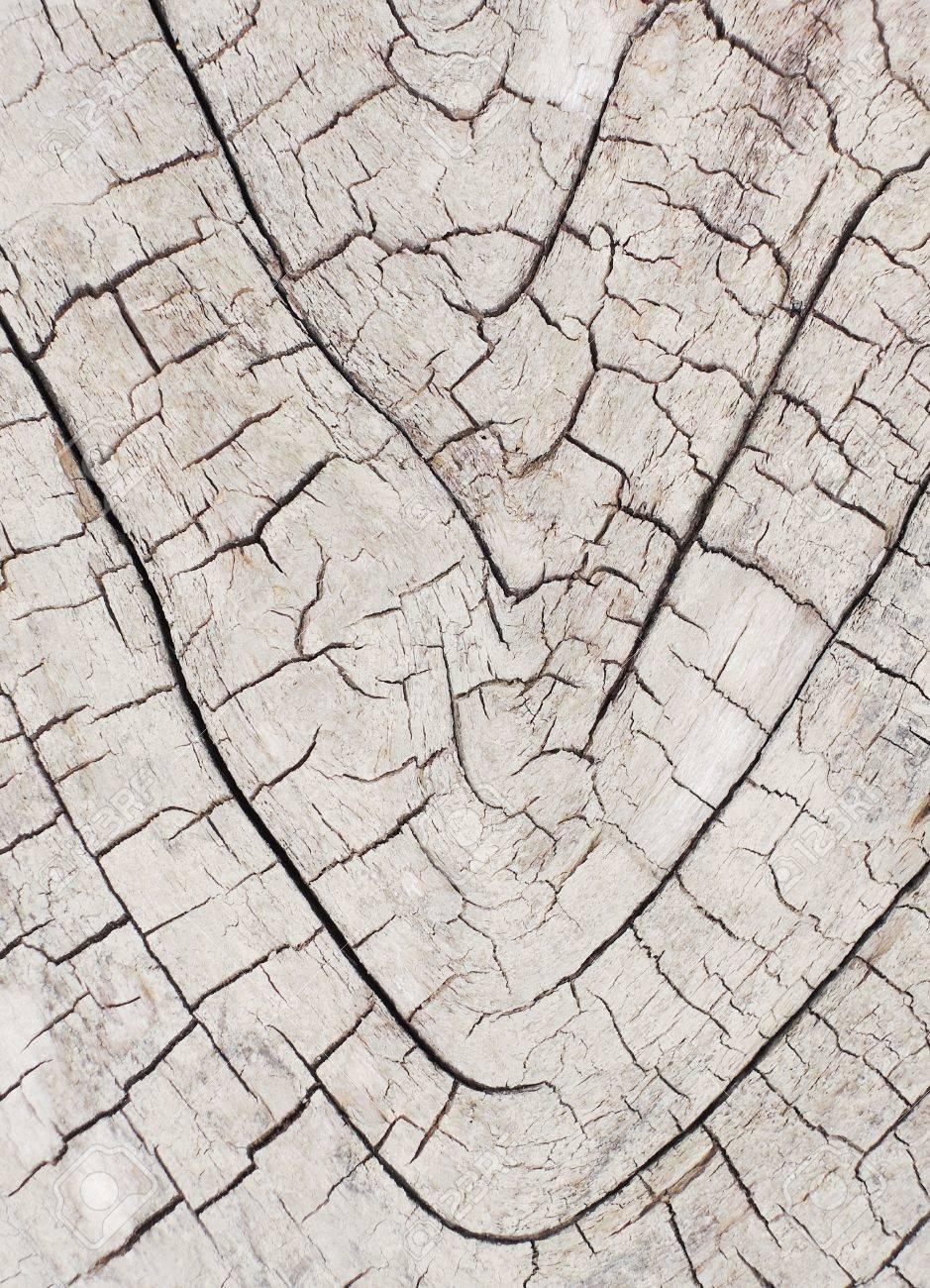 tree bark texture Stock Photo - 20776742