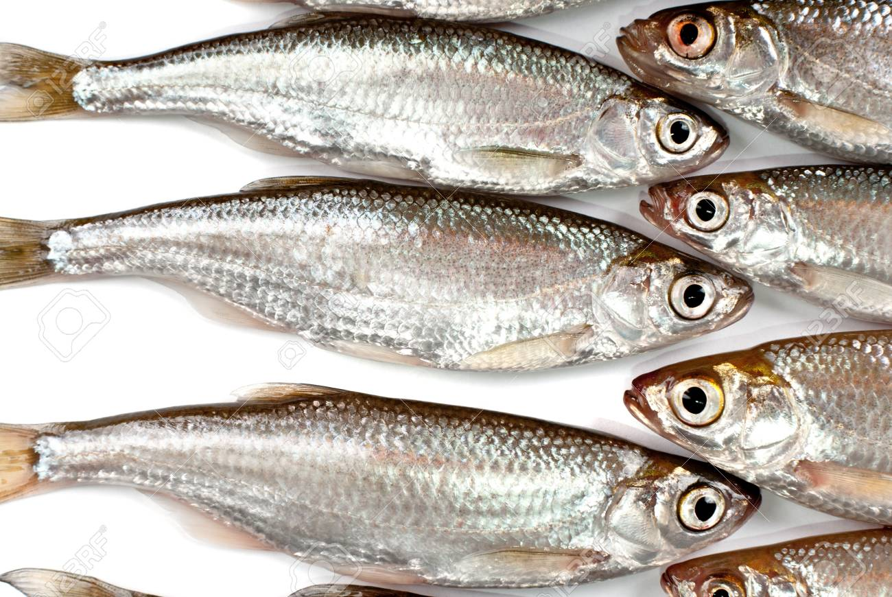 Small fishes background Stock Photo - 13230982