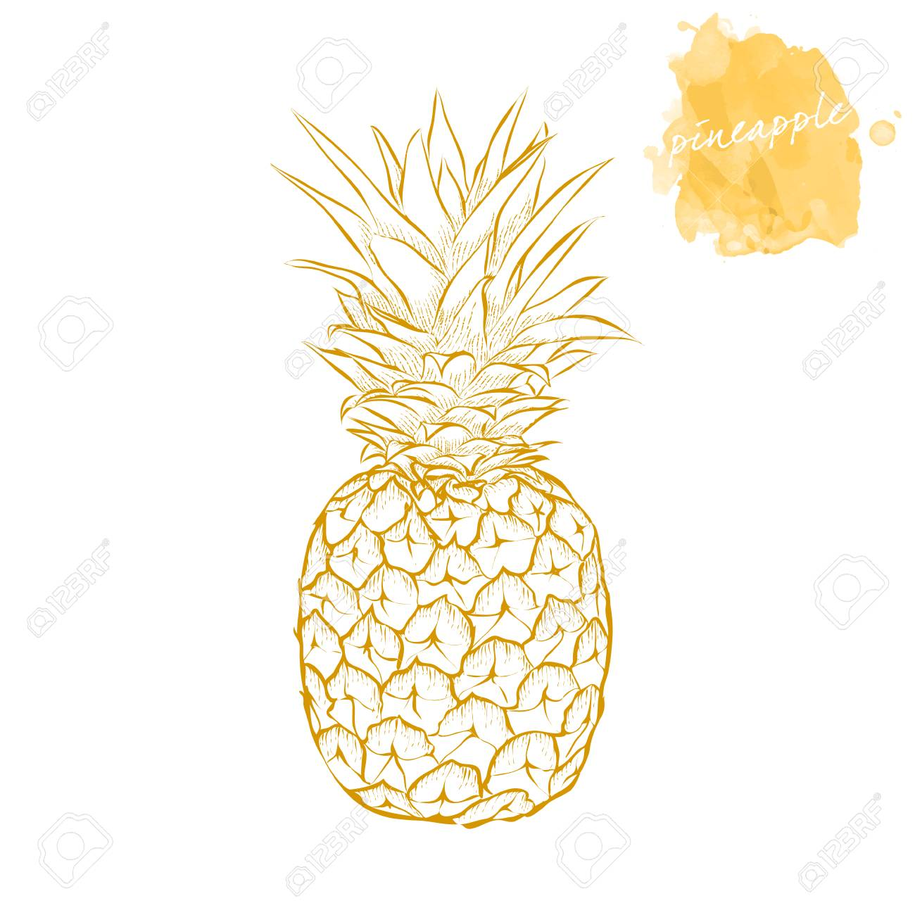 Ripe Pineapple On A White Background Hand Drawn Harvest Sketch