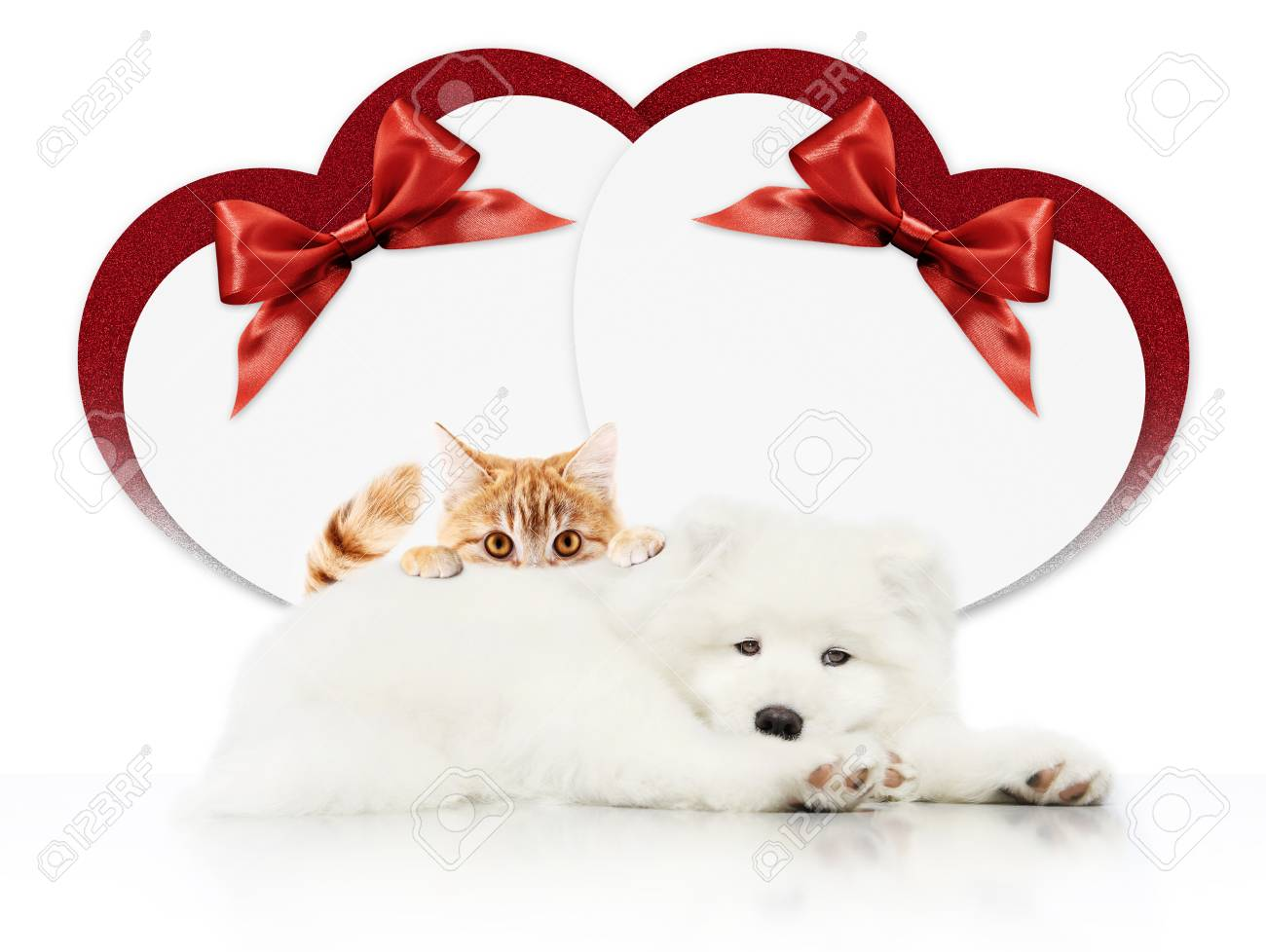 Valentine Gift Card Or Pets Store Signboard With Cat And Dog Stock