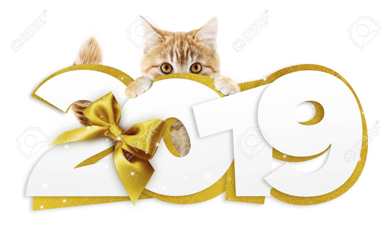 ginger cat showing happy new year 2019 text with golden ribbon isolated on white background