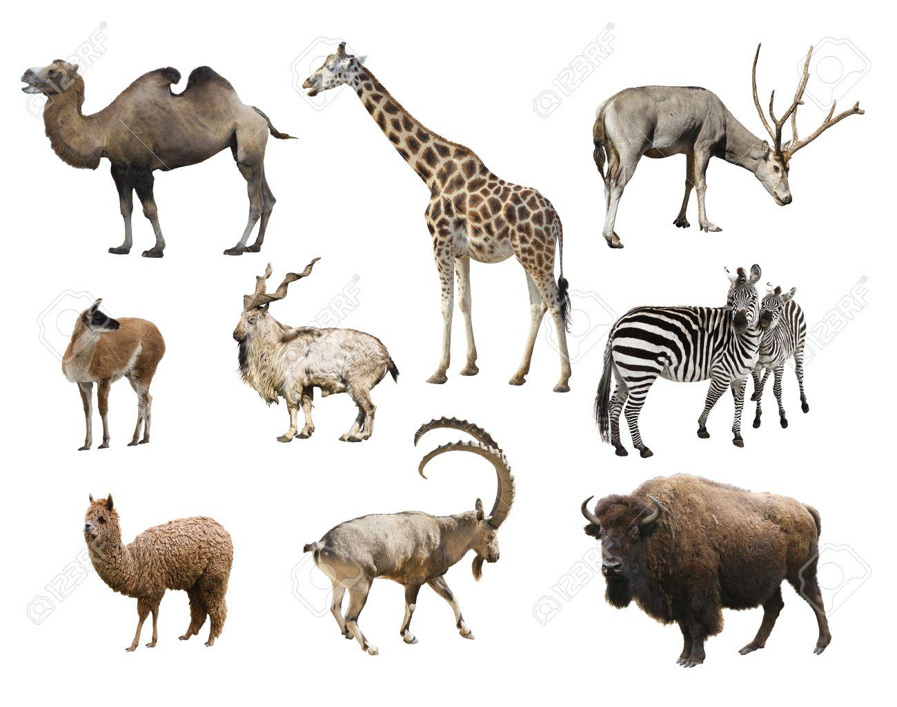 Resultado de imagen para mamíferos