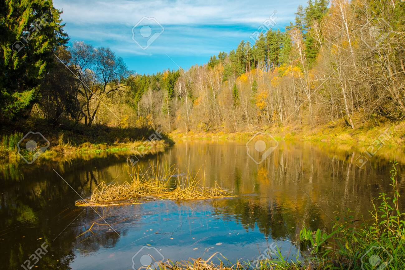 Autumn water landscape with bright colorful yellow leaves in the Vitebsk region, Belarus.autumn river in the forest - 134167130