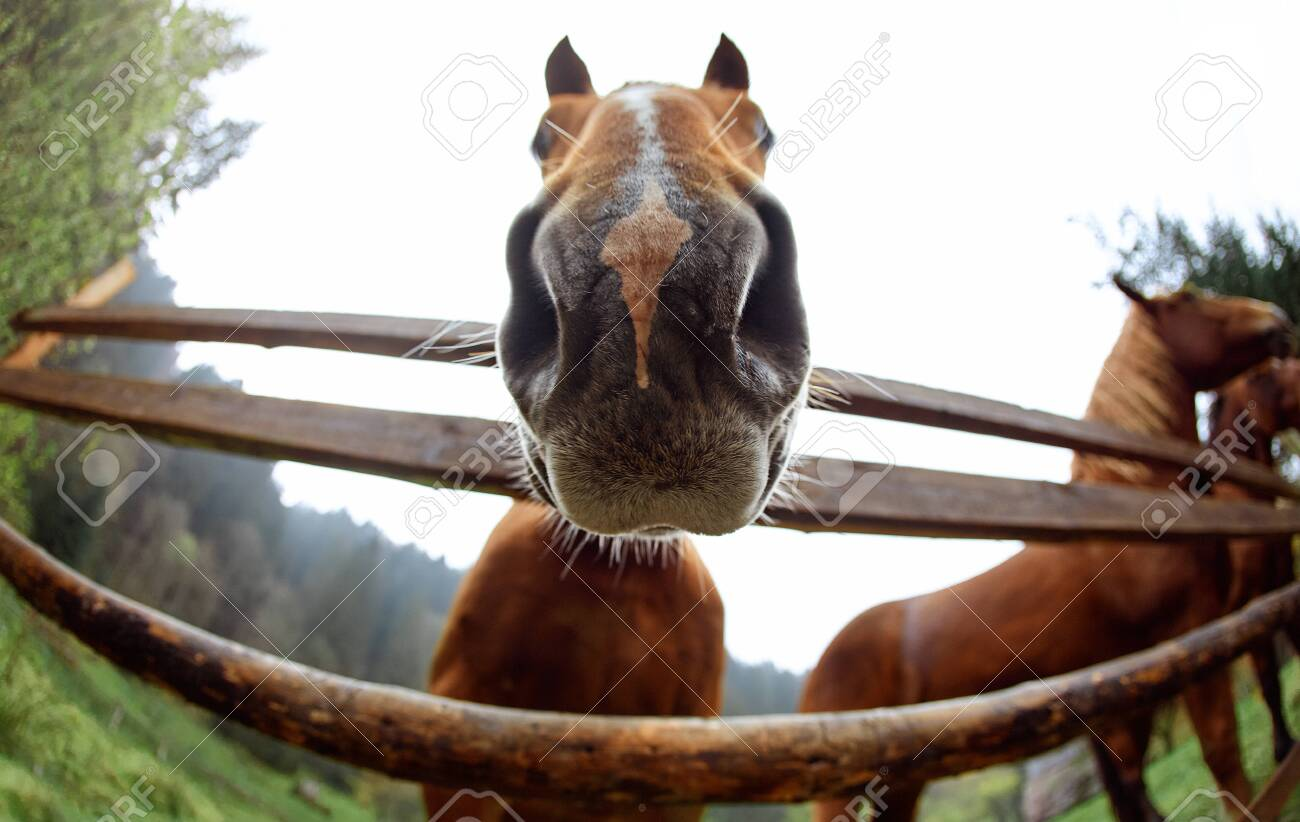Close Up Horse Head Portrait Cute Funny Brown Horse Peeping Stock Photo Picture And Royalty Free Image Image 130062654