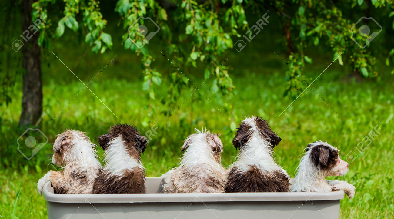 Rear view of a group of funny wet puppies sitting in a basket - 167016379