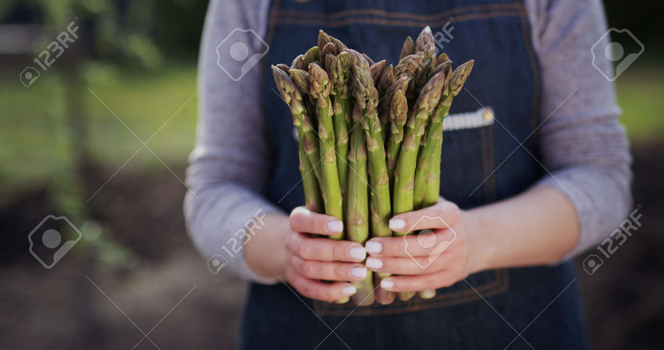 Female farmer holds sprouts of fresh asparagus, stands on a field - 170967437