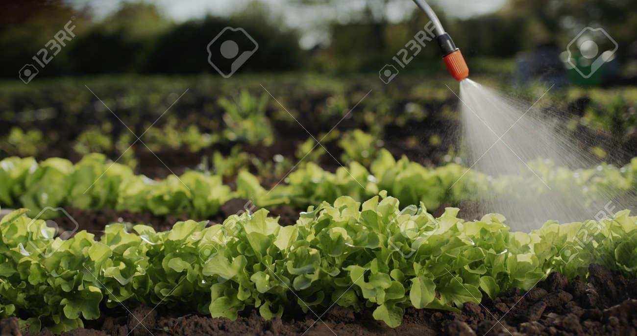 Farmer sprays green shoots on field, processing plants - 170967562