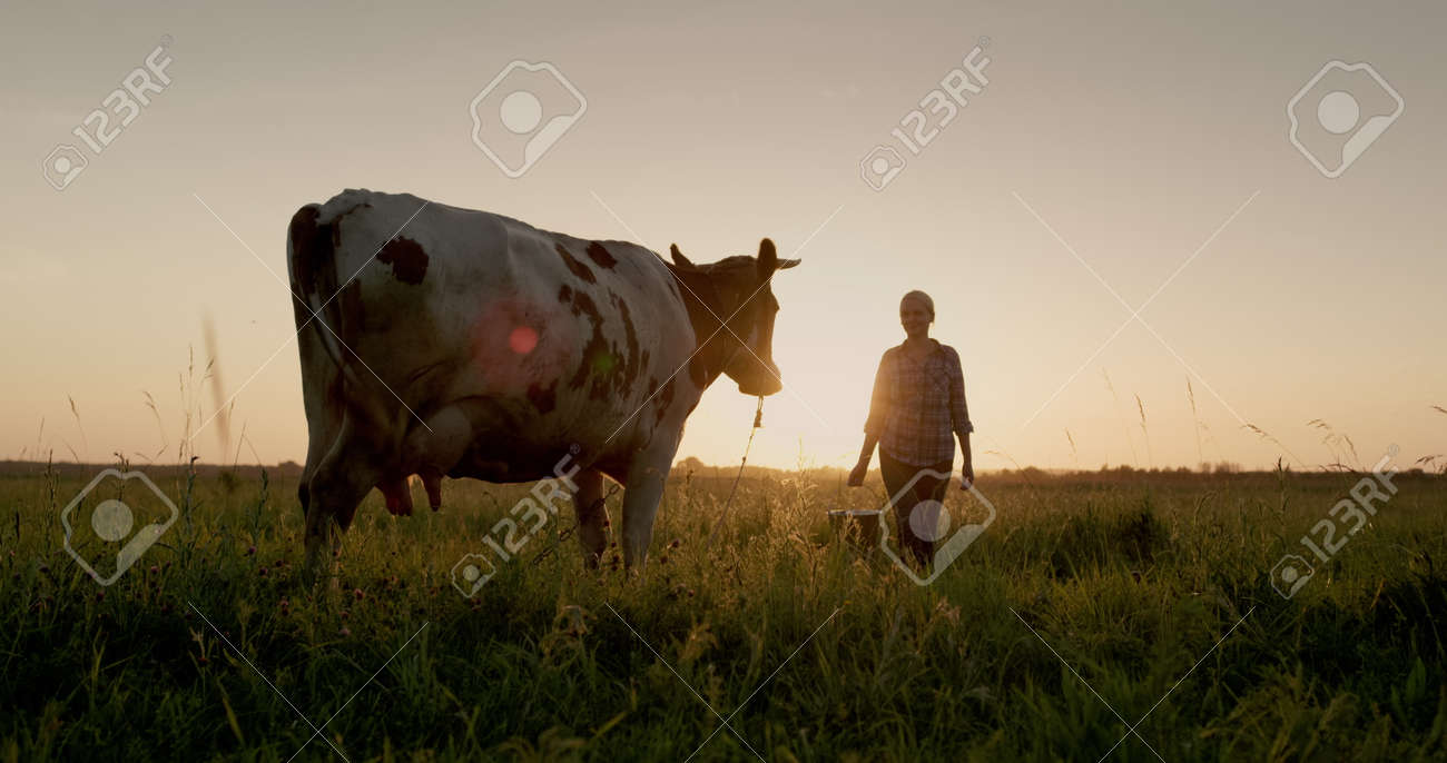 A female farmer walks with a bucket to her cow at sunset. Small agribusiness concept - 170754414
