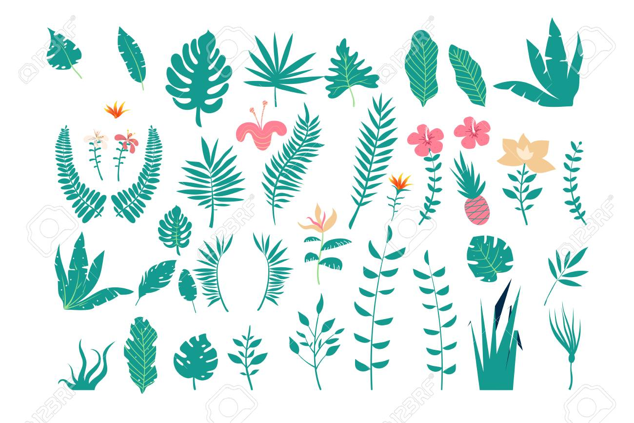 Collection of tropical leaves of various plants isolated on white background. Set of natural design elements. - 115907048