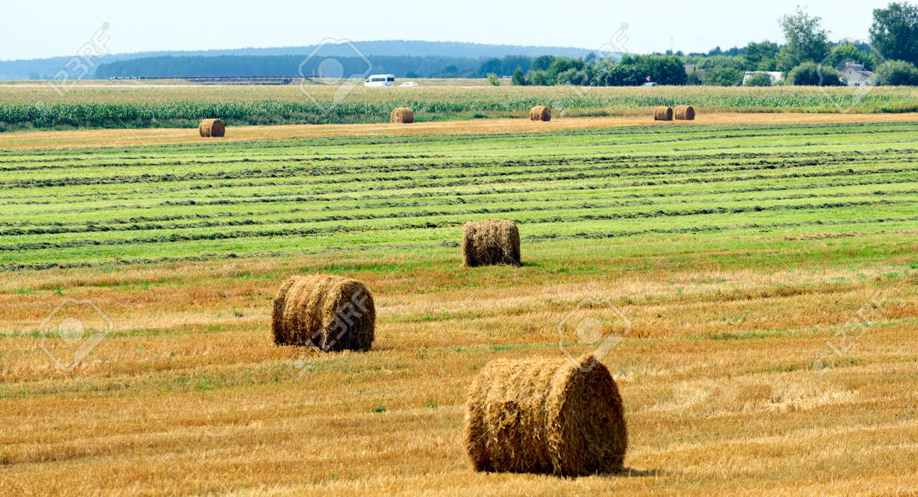 agriculture, harvesting karma, straw bales in the field near the village. - 155073367