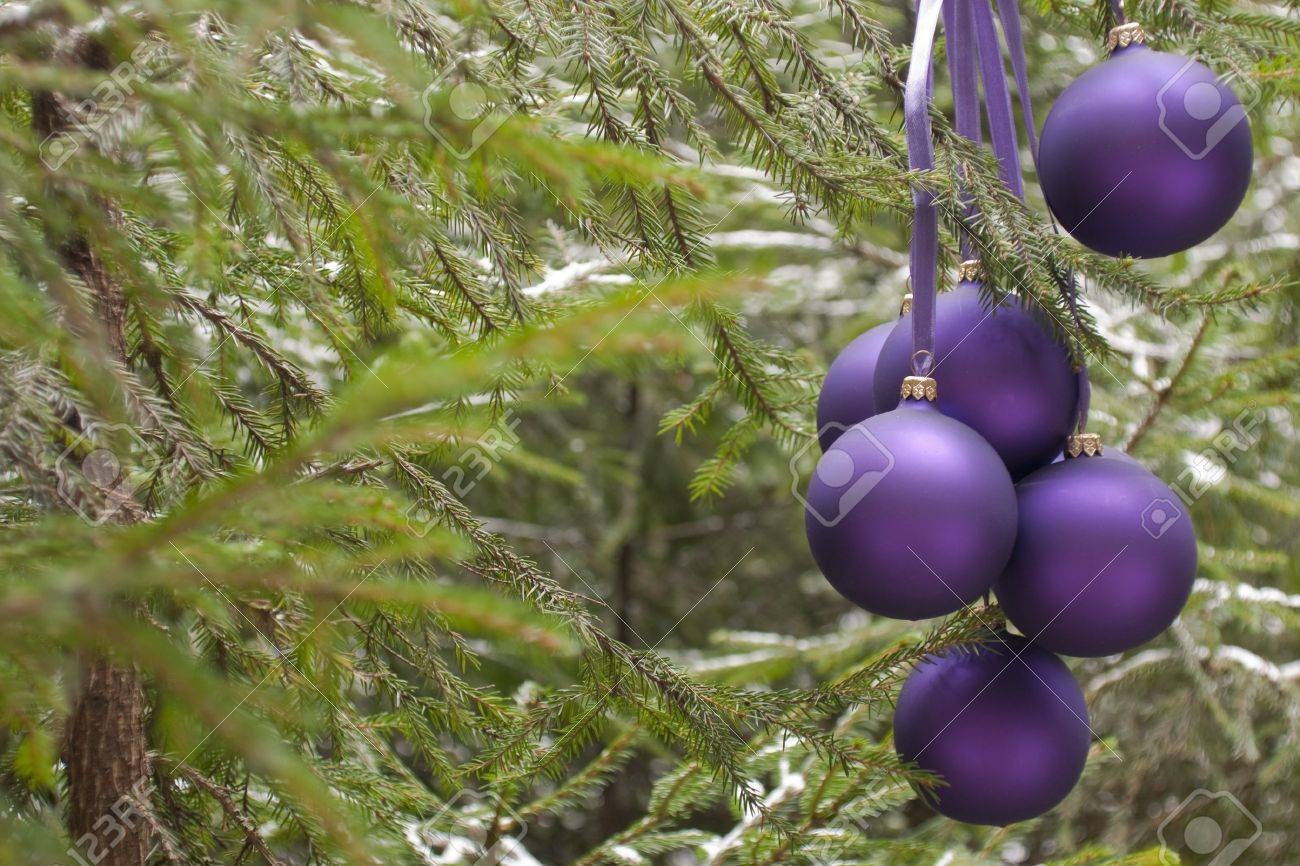 Violet New Year's baubles on a fir-tree in wood, december (outdoors) Stock Photo - 6074893