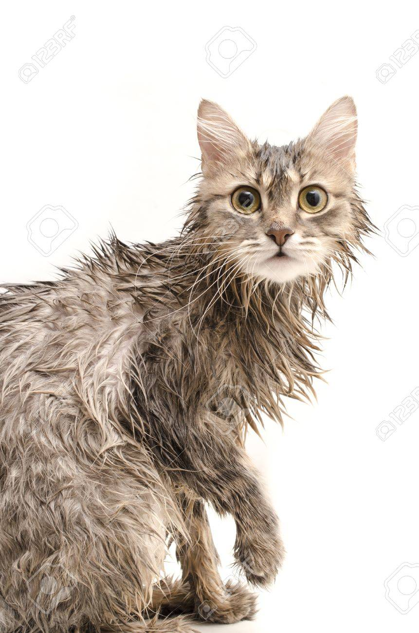 humide blanc chatte pics Mini porno films